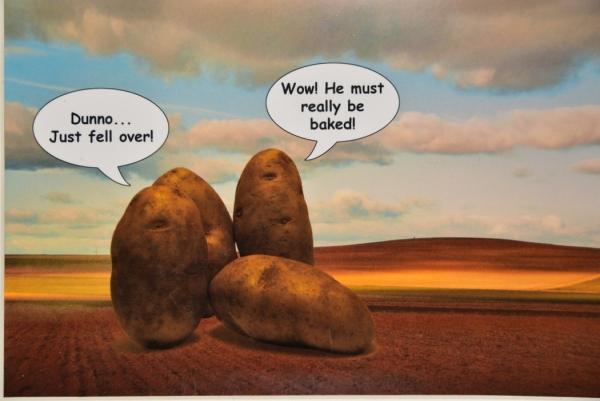 Special TopicHumorColor Advanced_Hot Potatoes_Stanley Glazer_20180111_Award