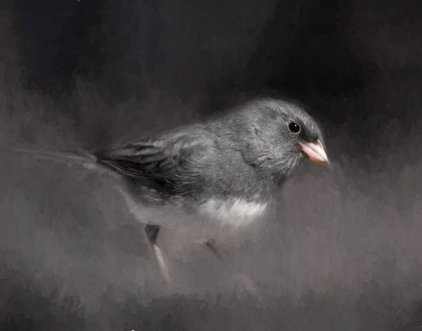 1st Place Print -Junco Male Impression 3 by Jerry Deutsch