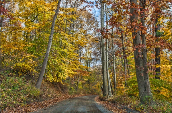 Color_Salon__Open_Down_the_Road_to_Fall_Tom_Bartel_20160428_Honorable_Mention[1]